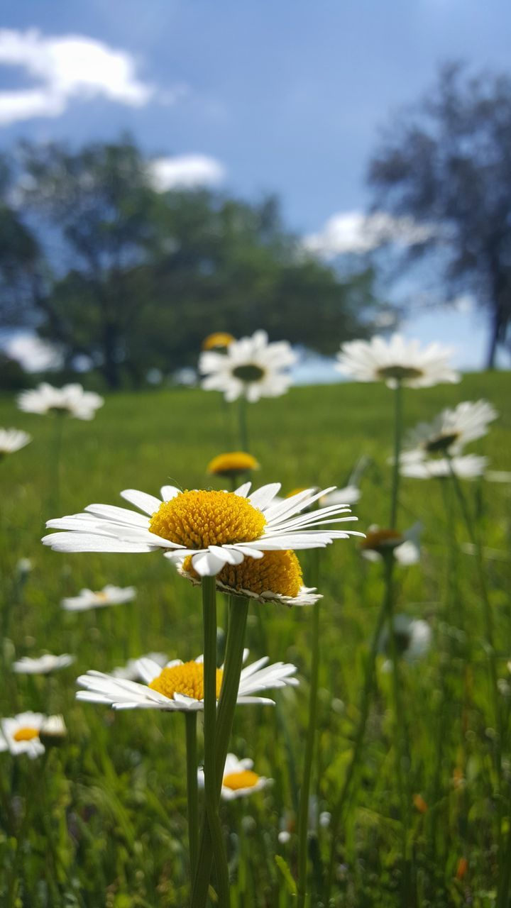 flower, growth, fragility, petal, nature, beauty in nature, freshness, yellow, day, flower head, plant, blooming, focus on foreground, green color, field, outdoors, no people, close-up, grass, animal themes, sky