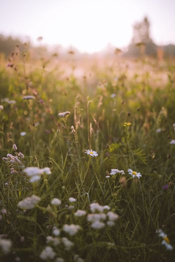 Grass Growth Nature Field Tranquility Tranquil Scene Plant Beauty In Nature No People Outdoors Landscape Flower Day Fragility Close-up Freshness Sky