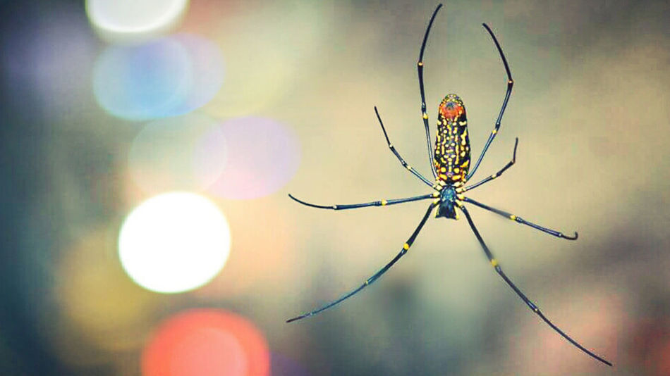 Arachnid Beauty In Nature Bookeh Close-up 43 Golden Moments Natural Light Portrait Fragility Illuminated Insect Natural Pattern Nature No People Outdoors Selective Focus Sky Spider Spider Web Sun Vignette Web Natures Diversities The Great Outdoors - 2016 EyeEm Awards The Architect - 2016 EyeEm Awards The Photojournalist - 2016 EyeEm Awards The Innovator