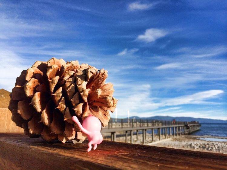 Kobito Kobitodukan Lake Tahoe Toys Adventure