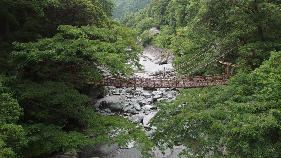 Japan 徳島県 かずら橋 Water Tree High Angle View Grass Green Color