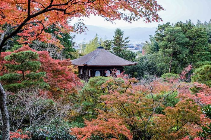 The beauty of ginkakuji Tree Growth Day Nature No People Autumn Tranquility Landscape Architecture First Eyeem Photo