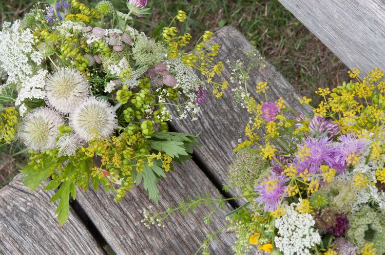Wild Herbs arranged as Flower Bouquet  - Dill , Parsnip , Queen Anne's Lace Nature's Diversities