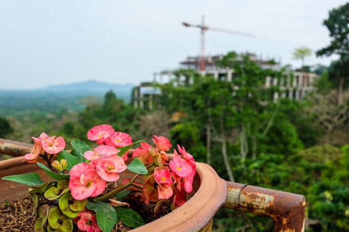 วัดเขาสุกิม Abundance Beauty In Nature Blooming Blossom Botany Eight Immortals Flower Flower Head Fragility Freshness Growing Growth In Bloom Leaf Nature Petal Pink Color Plant Summer Tropical Climate