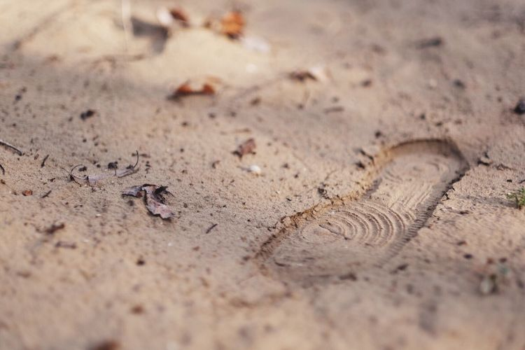 Sand footprint Sneakers FootPrint Dirt Selective Focus Close-up No People Animal Themes Animal Land Animal Wildlife Brown Full Frame Day Sand Nature Textured  Backgrounds