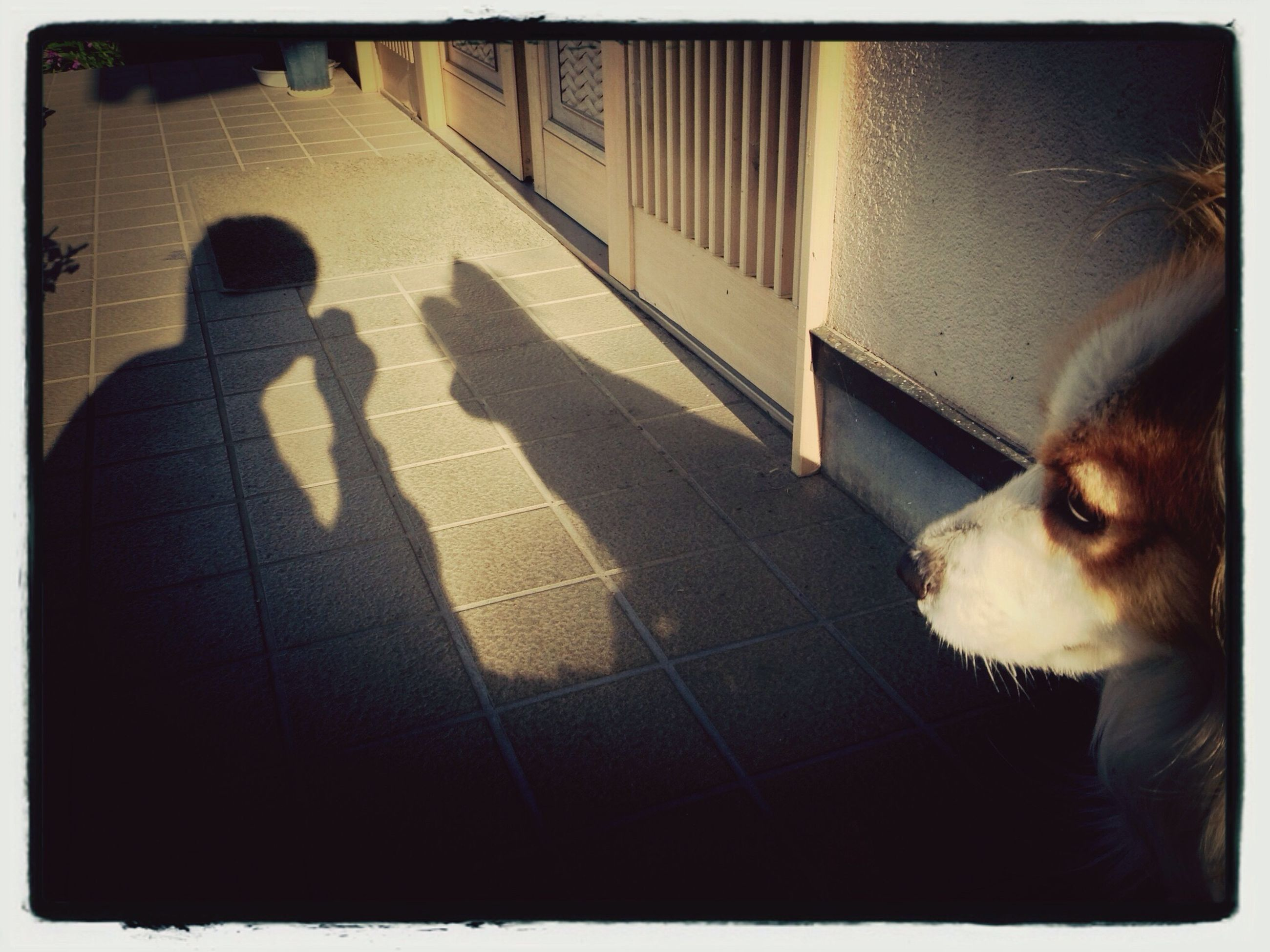 transfer print, pets, domestic animals, auto post production filter, mammal, animal themes, one animal, dog, indoors, domestic cat, sunlight, lifestyles, shadow, high angle view, relaxation, pet owner, day, cat