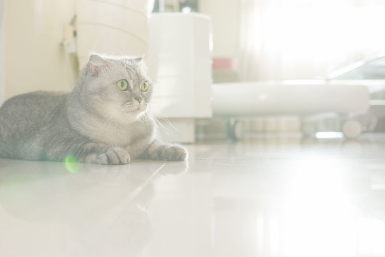 小清新 Cat Cats Cat♡ Catsofinstagram Leicam240 日式風 逆光 小清新 Taking Photos EyeEm Taiwan
