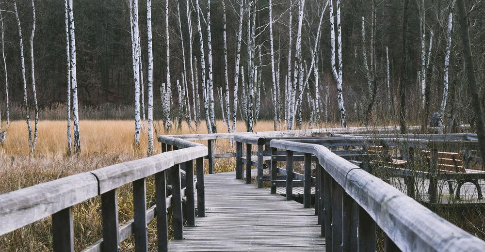 Wooden footbridge in forest during winter