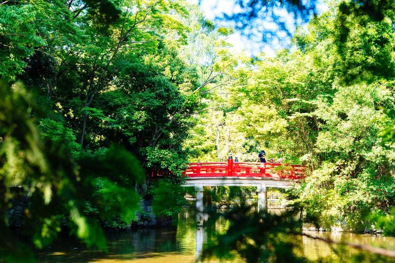 Summer Green Pond Shinto Shrine Hello Summer!  Saitama , Japan HikawaJinjya Japan Photography Green And Red Red Bridge Cool Wind Sony Sony α♡Love Loxia50 Enjoying Life Taking Photos Japanese Traditional Ultimate Japan June 2016