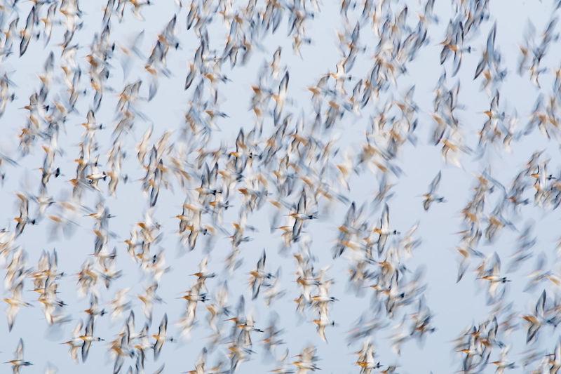 Full frame shot of birds flying against sky
