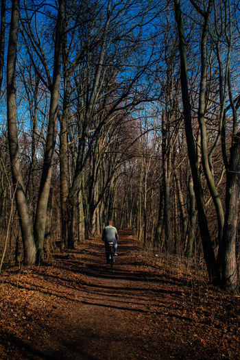 Rear view of man walking on bare trees in forest
