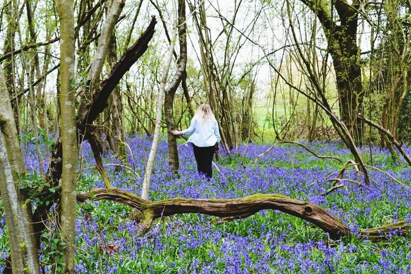 Bluebell woods Me Bluebells Nature Photography