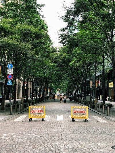 Tree City Street Land Vehicle Transportation Outdoors Growth Road Real People Day Nature Architecture People Tokyo