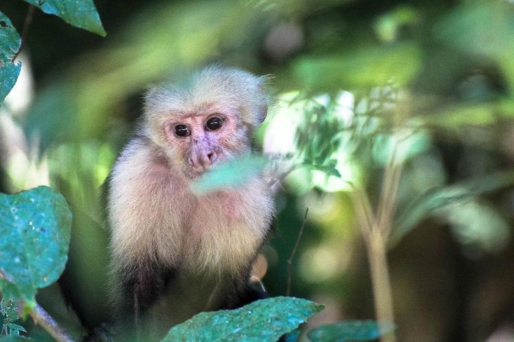 Monkey sitting by flowering plant