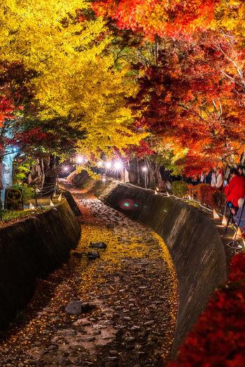 Illuminated trees in park during autumn