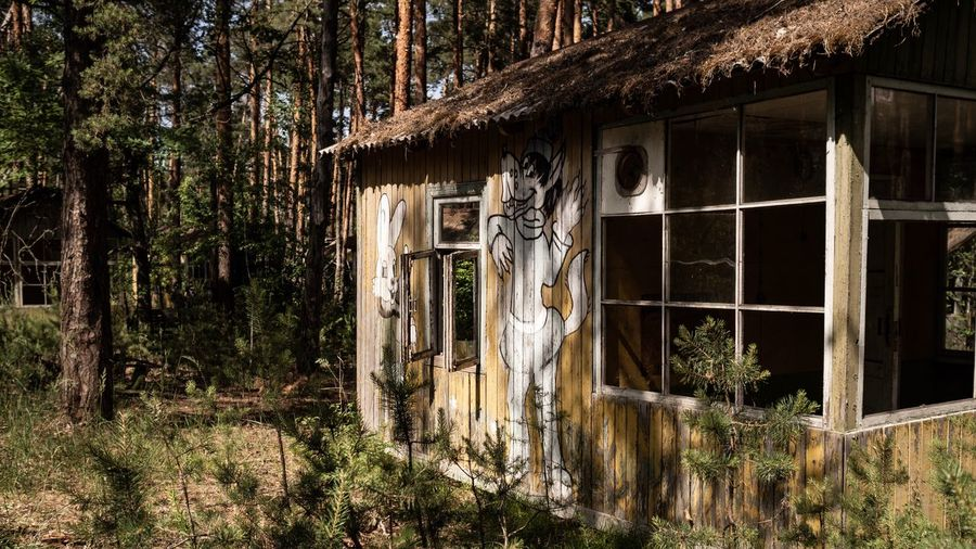 Abandoned building by trees in forest