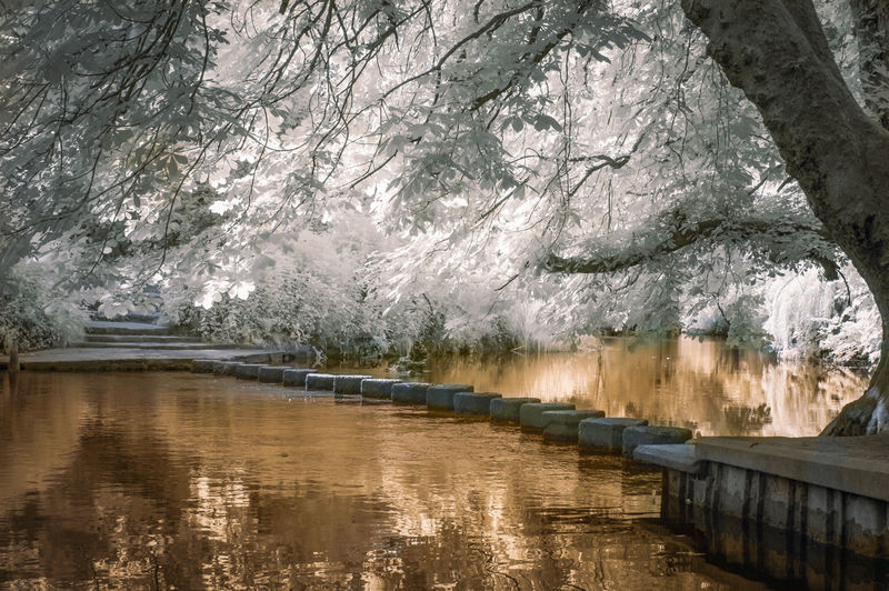 Abstract Beauty In Nature Box Hill Colour Different Infrared Infrared Photo Infrared Photography IR IR Photo Ir Photography Nature Nature Nature Photography Nature_collection Naturelovers No People Photography River Of Gold Scenics Tranquility Tree Water Waterfront Winter