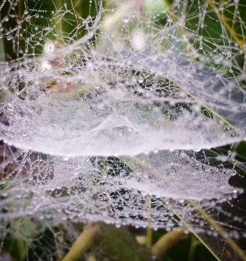 Spider Web Water Nature No People Day Beauty In Nature Close-up Outdoors Fragility Waterfall Freshness