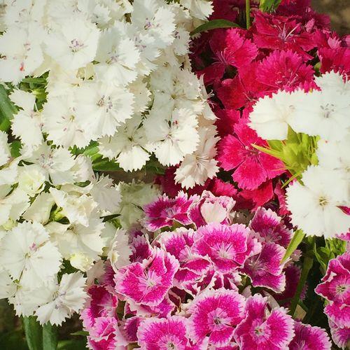 Flowers Okegawa Park Colors