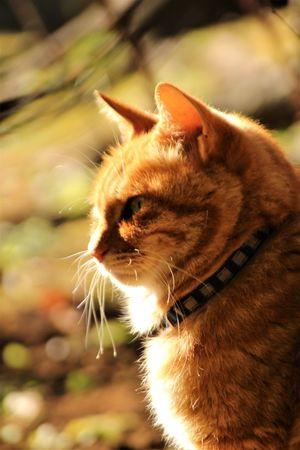 Japan Animal Themes Cat Close-up Enoshima One Animal