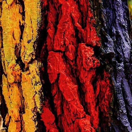 Bosquepintadodeoma Oma Bosque Wald Basoa Euskalherria Baskenland BasqueCountry árbol Tree Zuhaitza Vizcaya Bizkaia Biscay Colour Color Natura_love_ Natura Nature Madera Wood Summer Verano UDA Instagood Bilbao_Aachen Bilbao focus pic top_euskadi