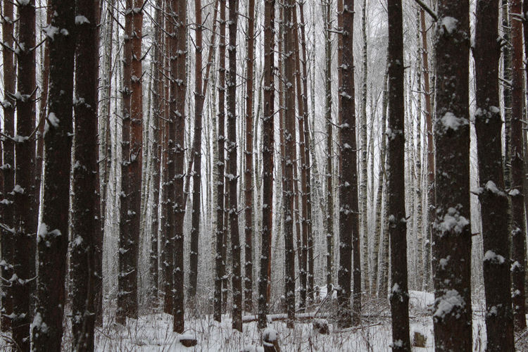 Full frame shot of trees in forest during winter