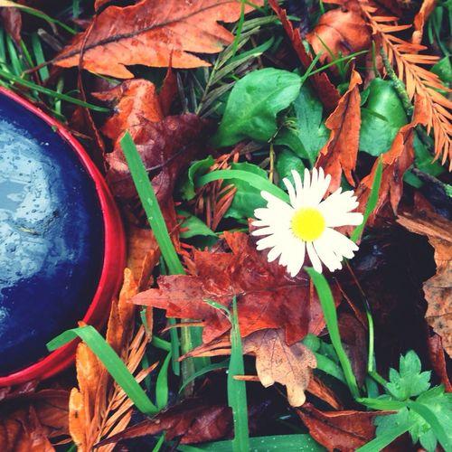 Bloemetje in de herfst