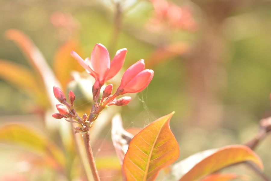 EyeEm Selects Plant Beauty In Nature Flowering Plant Flower Growth Close-up Plant Part Pink Color Day Selective Focus Leaf Nature No People