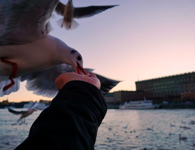 Close-up of seagull on hand against sea