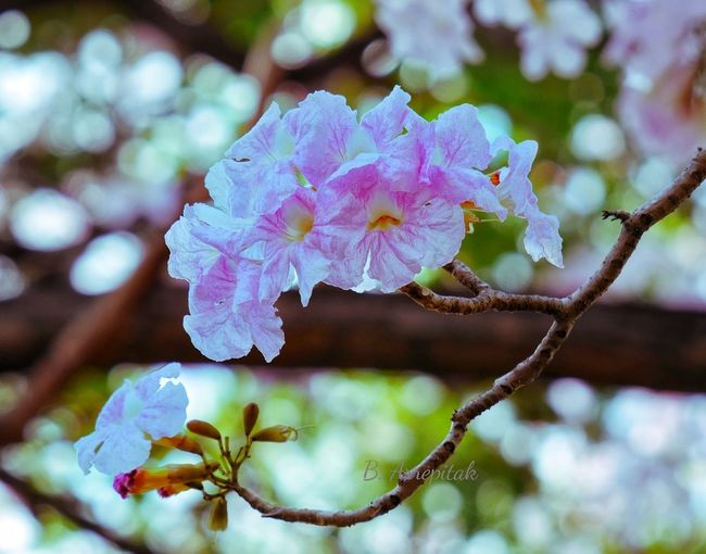 Close-up of flower blooming on tree