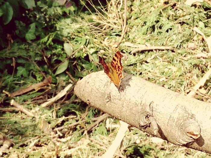C'est Un Papillon Que J'ai Trouvé Dans Un Jardin , Il N'était Pas Très Craintif ! First Eyeem Photo