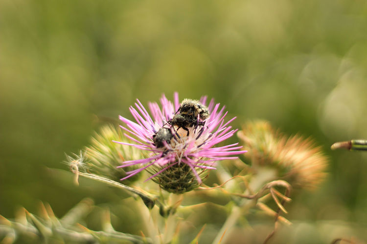 Animal Animal Themes Animals In The Wild Beauty In Nature Bee Close-up Flower Flower Head Flowering Plant Fragility Freshness Growth Inflorescence Invertebrate Nature No People One Animal Petal Pink Color Plant Pollen Pollination Vulnerability