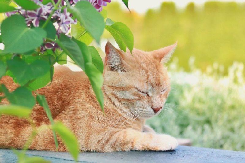 Close-up of cat sleeping on retaining wall