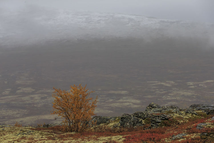 The amazing landscape of Dovre, Norway. Autumn colors Norway Arid Climate Beauty In Nature Climate Cloud - Sky Day Environment Fog Land Landscape Mountain Nature No People Non-urban Scene Outdoors Plant Remote Scenics - Nature Sky Tranquil Scene Tranquility Tree