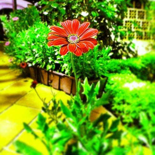 Garden Flowers Embu