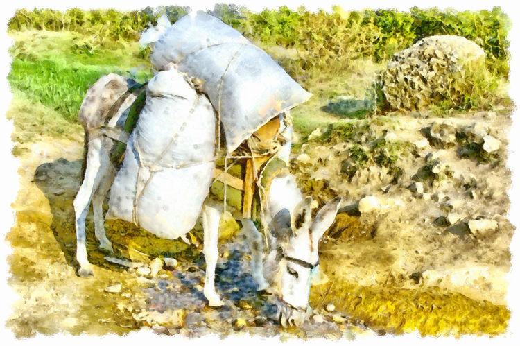 Donkey loaded with sacks, drink a stream Albania Animal Themes Donkey Drink Food Grass Mammal Outdoors Sacks Stream Water Watercolor Watercolor Painting