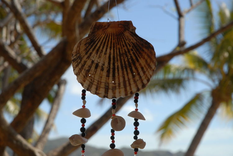 Wind chime hanging from a tree at Horseshoe Bay Close-up Day Focus On Foreground Hanging Leisure Time No People Outdoors Peaceful Relaxation Relaxing Shells Sky Time To Relax Tranquility Tree Tropical Holiday Wind Chime Place Of Heart
