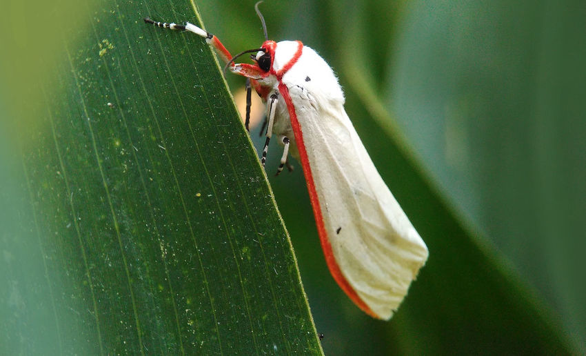 White Monster Animals In The Wild Animal Animal Themes Animal Wildlife Animals In The Wild Close-up Day Fragility Grasshopper Green Color Insect Leaf Nature No People One Animal Outdoors Plant Strange Animal Strange Insect White Animal White Monster Wildlife