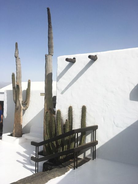 Day Sunlight Shadow No People Outdoors Sky Nature Architecture Cold Temperature Clear Sky Cactus Wall White } Blue