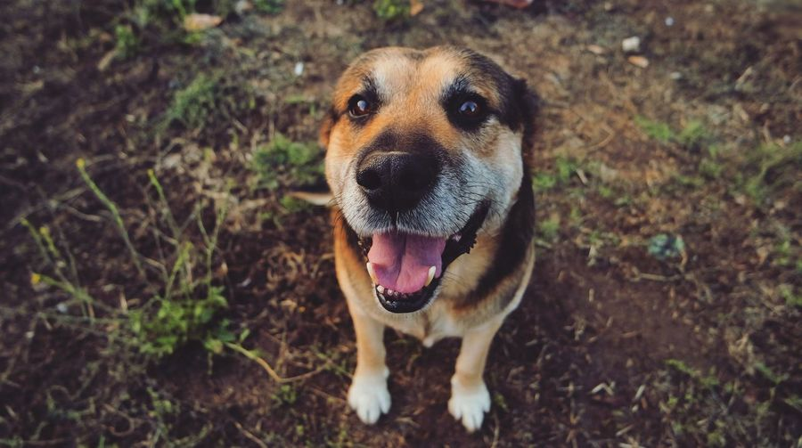 Dog Pets Domestic Animals One Animal Animal Themes Looking At Camera Portrait Outdoors Day The Portraitist - 2017 EyeEm Awards