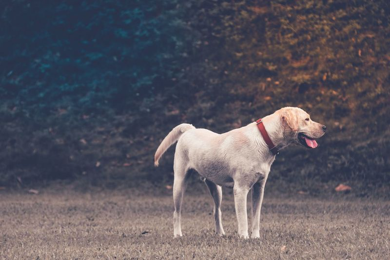 Side view of dog looking away while standing on field