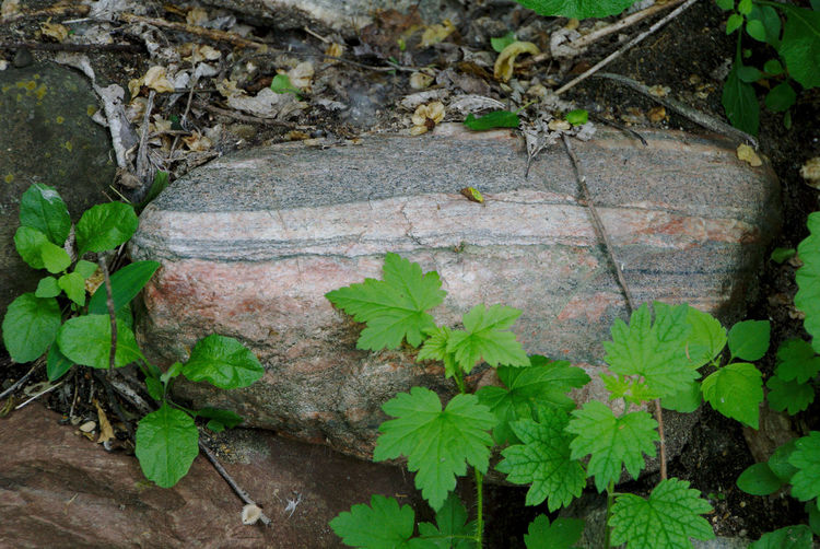 Striped rock Rock Striations Striated Rocks Striations Of Color Tree Leaf High Angle View Close-up Plant Green Color Growing Stone Boulder