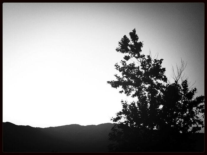 Sky Trees Tree Panorama