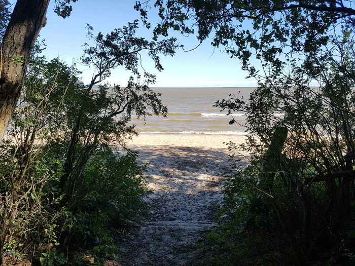 Beach Beauty In Nature Branch Clear Sky Day Growth Horizon Over Water Landscape Nature No People Outdoors Scenics Tranquil Scene Tranquility Tree Water