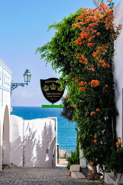 Algarve Beauty In Nature Coastline Day Eye4photography  Finding New Frontiers Growth Holiday Narrow Street Nature No People Outdoors Romantic Scenics Sea Sky Summer Summertime The Essence Of Summer Tranquil Scene Travel Destinations Tree Urban Landscape Water Waterfront