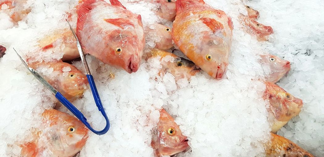 Fresh fish on ice for sale WeekOnEyeEm Food And Drink Food Freshness Seafood High Angle View Fish No People Wellbeing Healthy Eating Raw Food Still Life For Sale Animal Retail  Vertebrate Directly Above Close-up Market Fishing Industry Red Freezing Ice Death