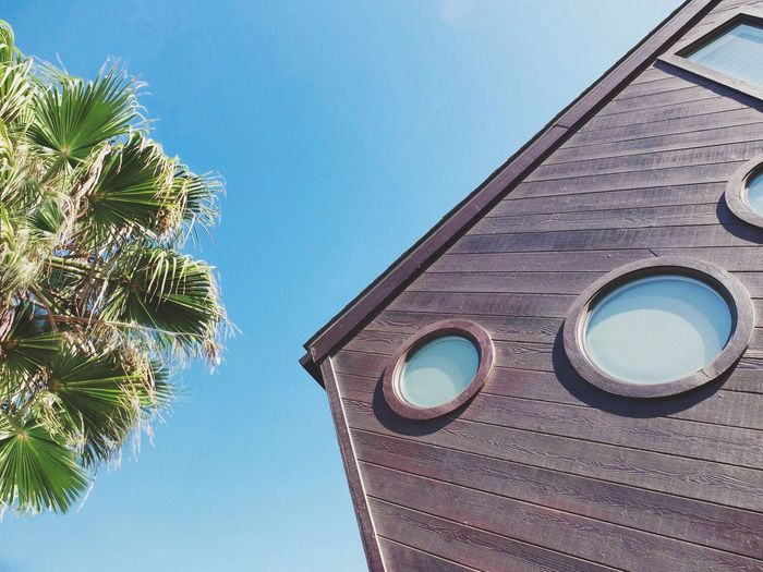 Venice views Palm Tree Low Angle View Architecture Built Structure Sky Day Blue California Dreamin Outdoors Clear Sky
