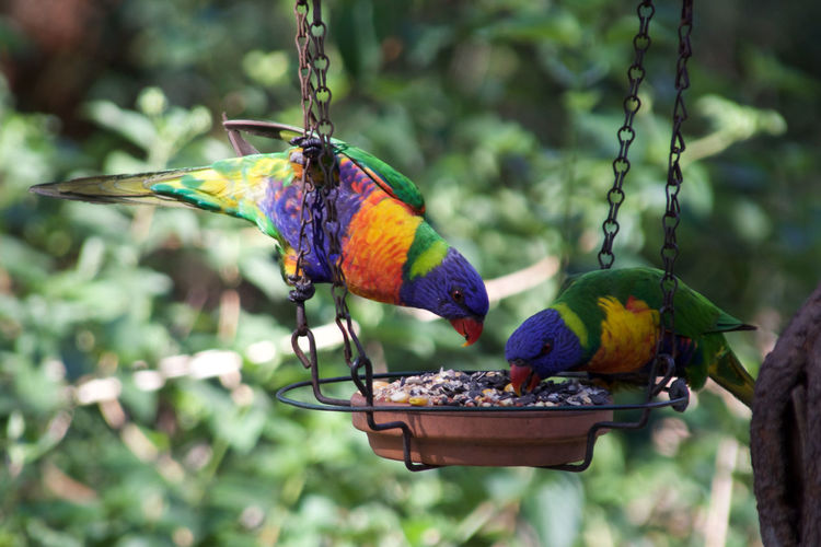 Close-up of parrots perching on bird feeder