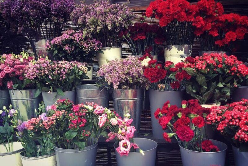 Beautiful Nature Flowers Taking Photos London City Bakerstreet