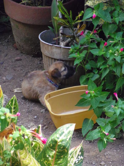 Cat sitting on potted plant in yard